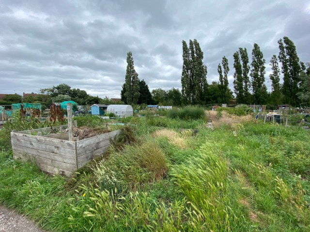 Overgrown allotment with compost bin